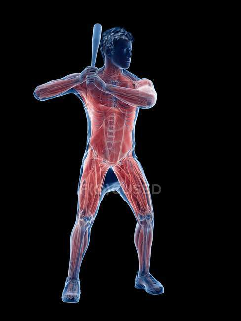 Мужские мышцы бейсболиста во время держания летучей мыши, компьютерная иллюстрация . — стоковое фото