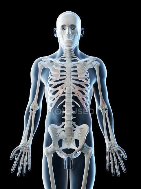 Silueta masculina con huesos visibles de la parte superior del cuerpo, ilustración por ordenador . - foto de stock