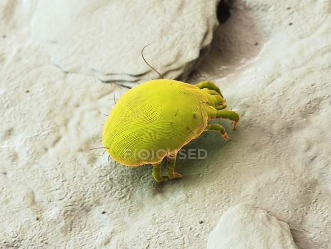 Verde colorato acaro della polvere, illustrazione digitale . — Foto stock