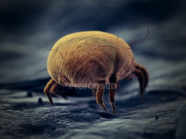 Parassita dell'acaro della polvere, illustrazione digitale microscopica . — Foto stock