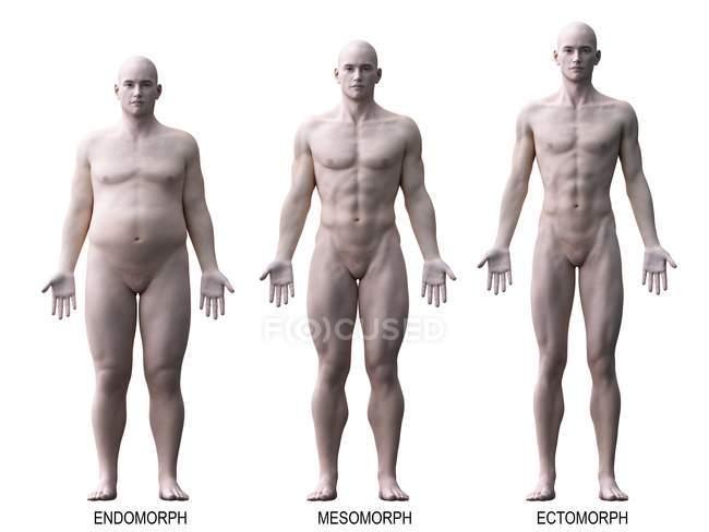 Различные типы мужского тела, компьютерная иллюстрация. — стоковое фото