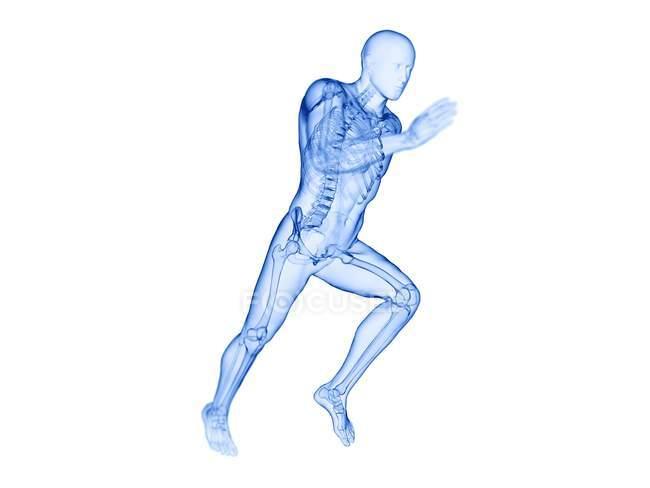 Skeleton in runner body silhouette in action, computer illustration. — Fotografia de Stock