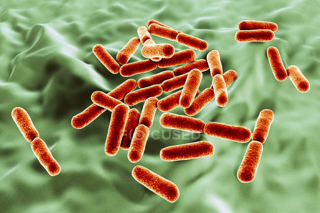 Red colored probiotic rod-shaped gram-positive aerobic Bacillus clausii bacteria restoring microflora of intestine. — Stock Photo