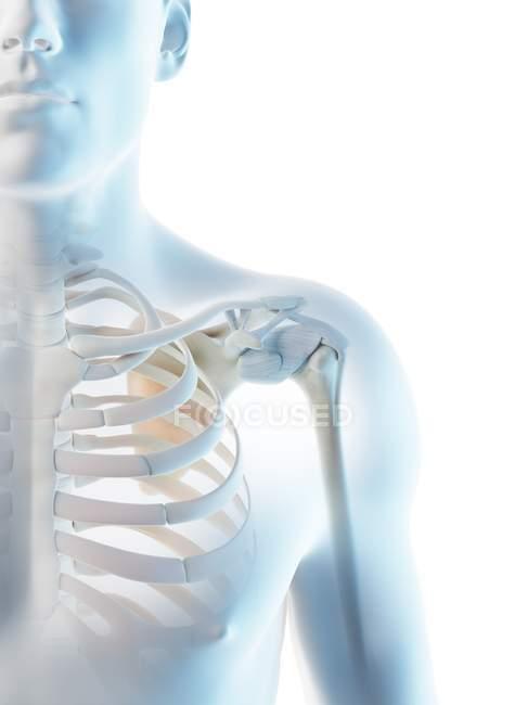 Huesos masculinos abstractos del hombro, ilustración de la computadora . - foto de stock