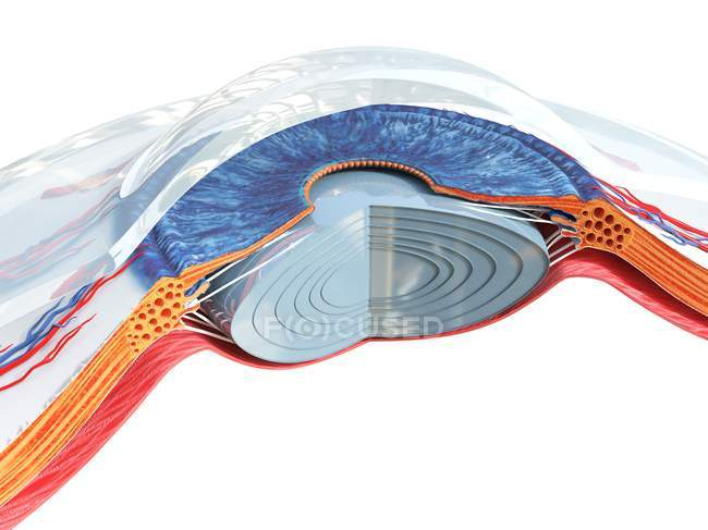 Anatomie oculaire humaine, illustration par ordinateur . — Photo de stock