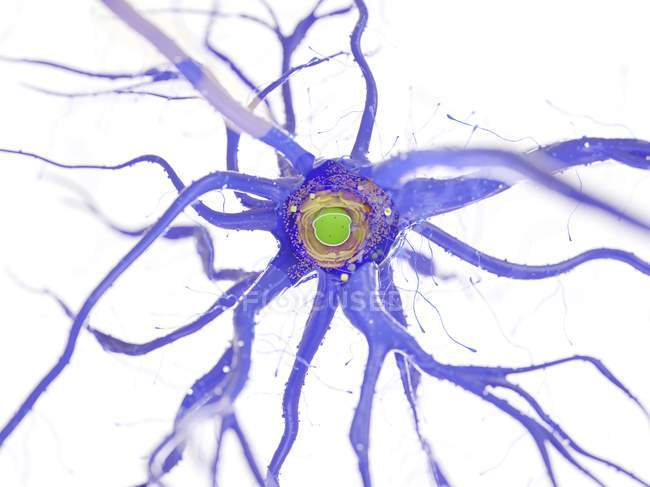Structure cellulaire nerveuse en coupe transversale sur fond blanc, illustration numérique . — Photo de stock