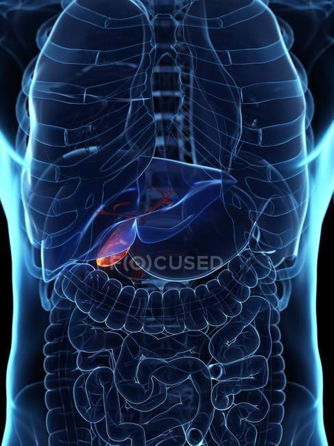 Diseased gallbladder in abstract human body, conceptual digital illustration. — Stock Photo