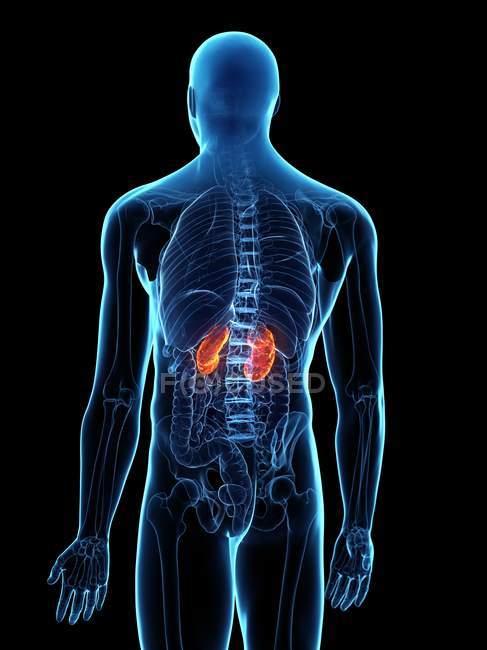 Хвороби в абстрактному чоловічому тілі, комп'ютерна ілюстрація. — стокове фото