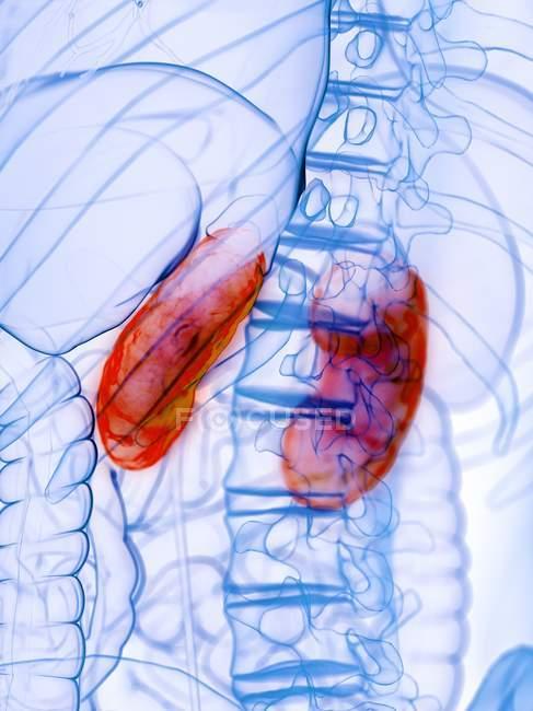Rins doentes em corpo masculino abstrato, ilustração conceitual do computador . — Fotografia de Stock