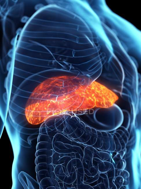 Diseased liver in male body silhouette, digital illustration. — Stock Photo