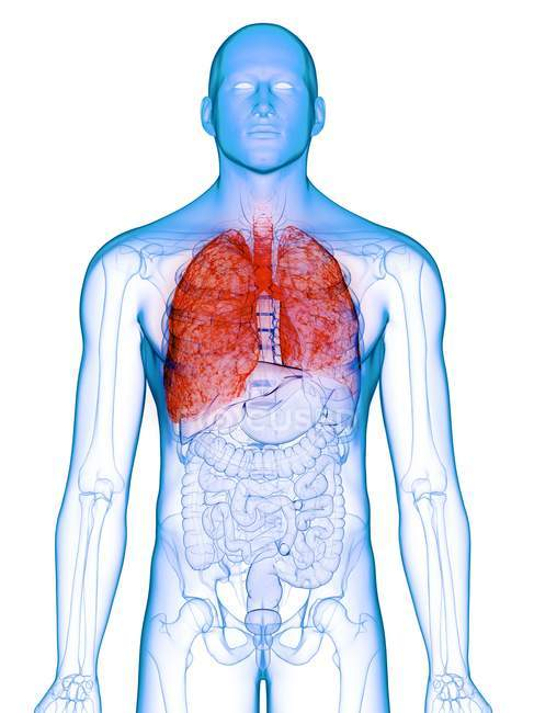 Pulmões doentes em corpo masculino transparente sobre fundo branco, ilustração do computador . — Fotografia de Stock