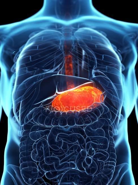 Болезнь желудка в абстрактном мужском теле, цифровая иллюстрация . — стоковое фото