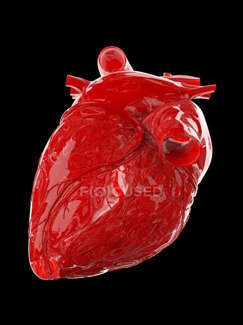 Corazón humano rojo sobre fondo negro, ilustración por ordenador . - foto de stock