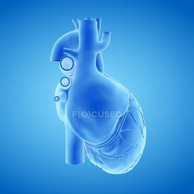 Модель людського серця на синьому тлі, комп