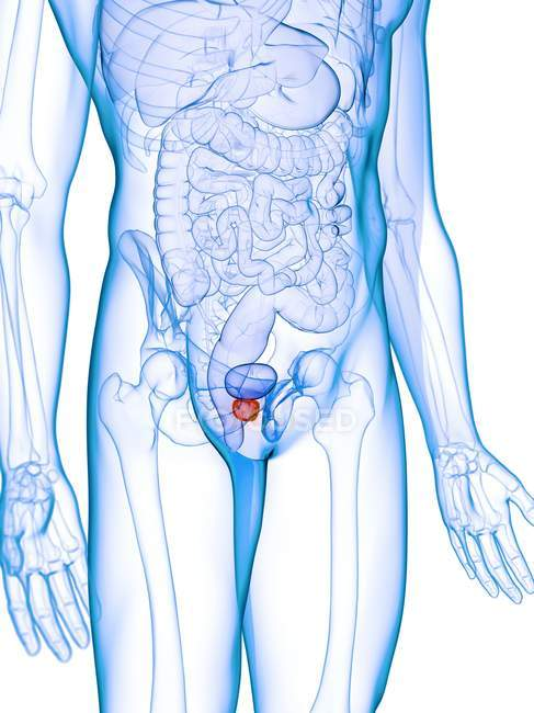 Inflamed prostate in abstract male body, digital illustration. — Stock Photo