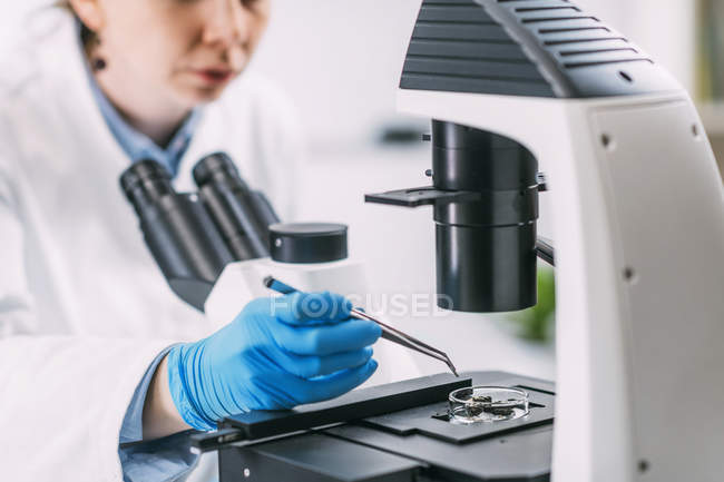 Portrait of young archaeologist analyzing charred wood under microscope. — Stock Photo