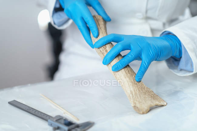 Дослідник археології в лабораторії демонструє, що роги використовуються як інструмент в передісторії. — стокове фото