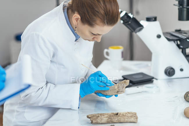 Young female archaeology researcher in laboratory analyzing ancient antler tool. — Stock Photo
