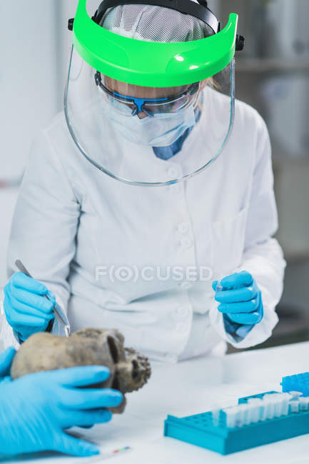 Bioarchaeologists analyzing human osteological material in laboratory. — Stock Photo