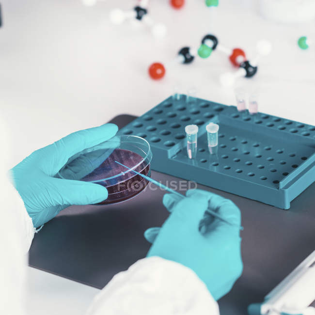 Microbiologiste pipetage dans une boîte de Pétri en laboratoire . — Photo de stock