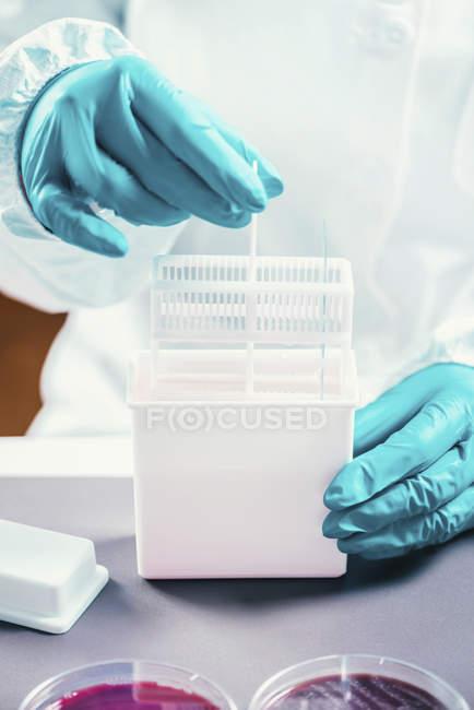 Technicien en microbiologie travaillant avec des souches de bactéries dans une boîte en plastique . — Photo de stock