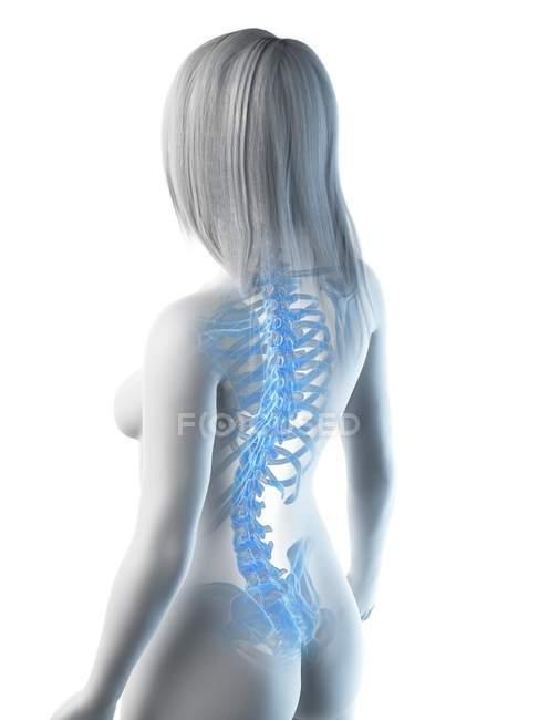 Cuerpo femenino abstracto con huesos visibles en la espalda, ilustración por computadora . - foto de stock