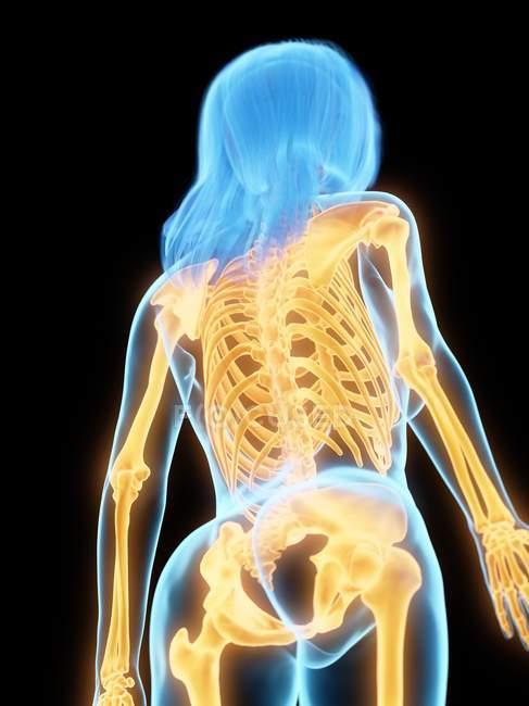 Corpo femminile astratto con ossa dorsali visibili, illustrazione al computer . — Foto stock