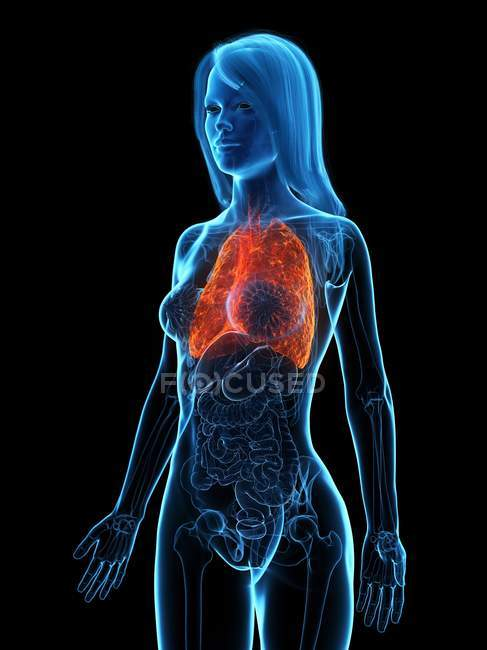 Diseased lungs in transparent female body on black background, computer illustration. — Stock Photo
