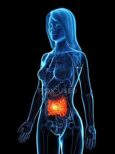 Diseased small intestine in female body transparent silhouette on black background, digital illustration. — Stock Photo