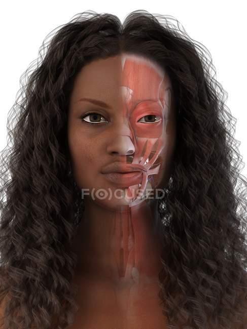 Cara femenina que muestra anatomía facial, ilustración por computadora . - foto de stock