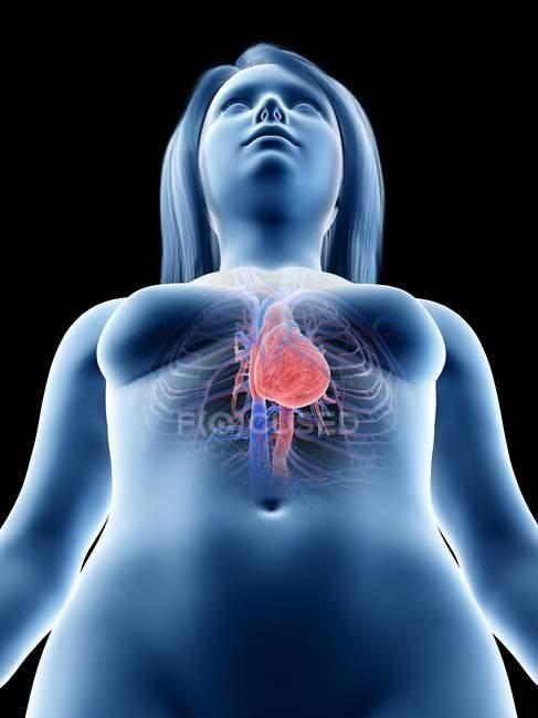 Силует жіночої статі з анатомією серця, ілюстрацією до комп