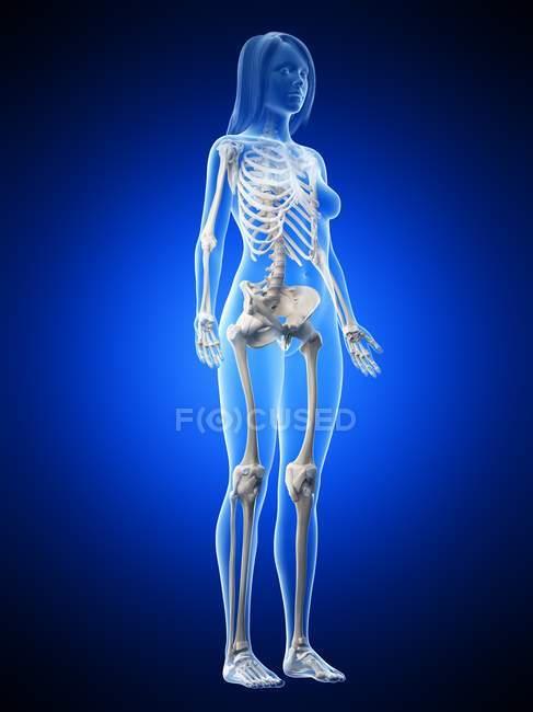 Scheletro femminile in silhouette trasparente del corpo su sfondo blu, illustrazione al computer . — Foto stock