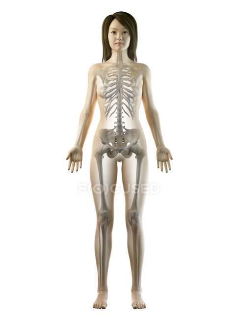 Squelette visible dans la silhouette du corps féminin en vue de face, illustration par ordinateur . — Photo de stock