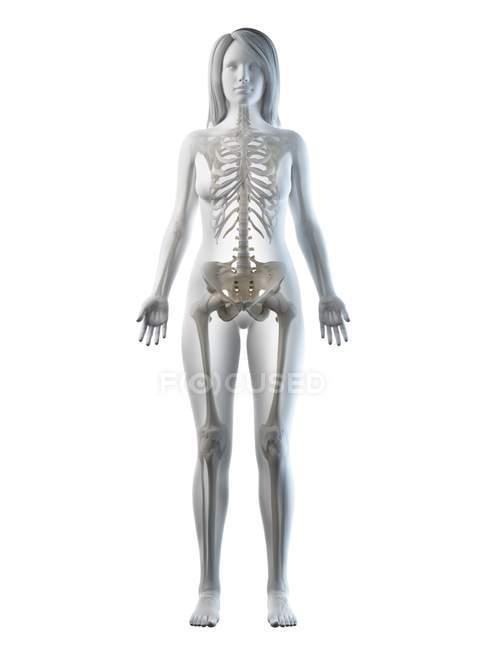 Видимый скелет в силуэте женского тела перед глазами, компьютерная иллюстрация. — стоковое фото