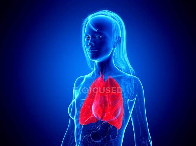 Red colored lungs in female body silhouette on blue background, digital illustration. — Stock Photo