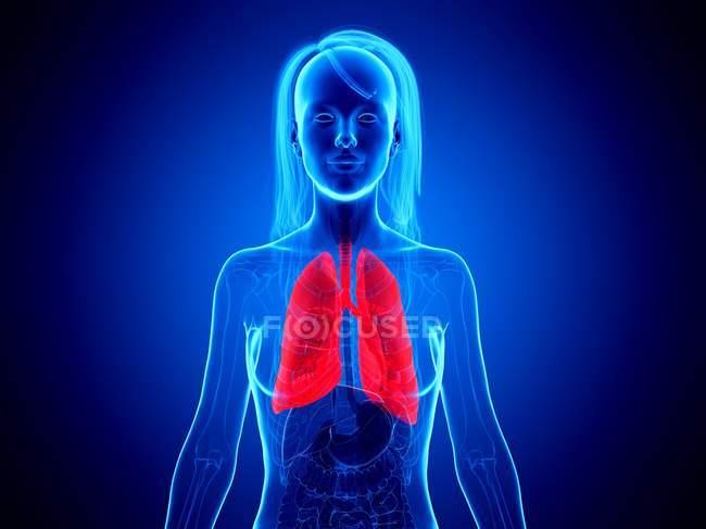 Червоні легені в силуеті жіночого тіла на синьому фоні, цифрова ілюстрація. — стокове фото