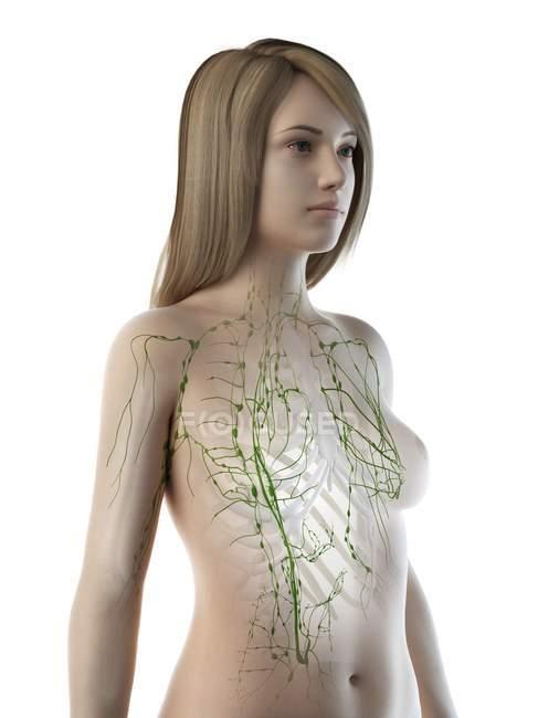Cuerpo anatómico femenino con sistema linfático visible, ilustración por ordenador . - foto de stock