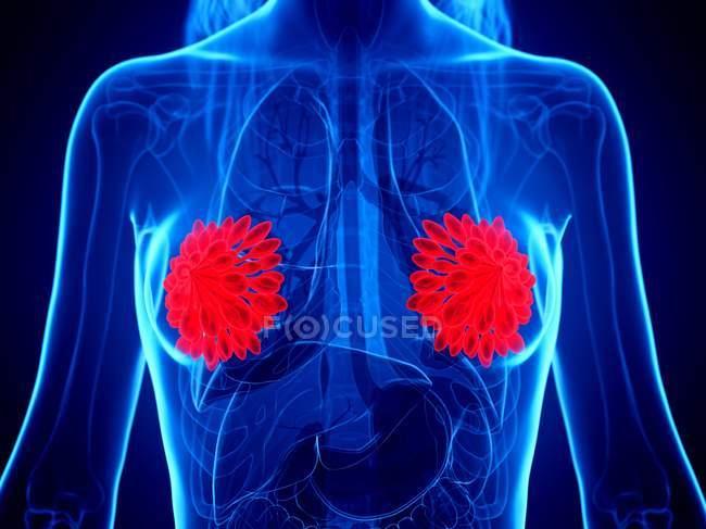 Glándulas mamarias de color rojo en el cuerpo abstracto femenino sobre fondo azul, ilustración digital . - foto de stock