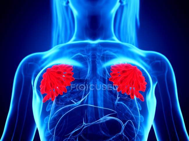 Red colored mammary glands in female abstract body on blue background, digital illustration. — Stock Photo