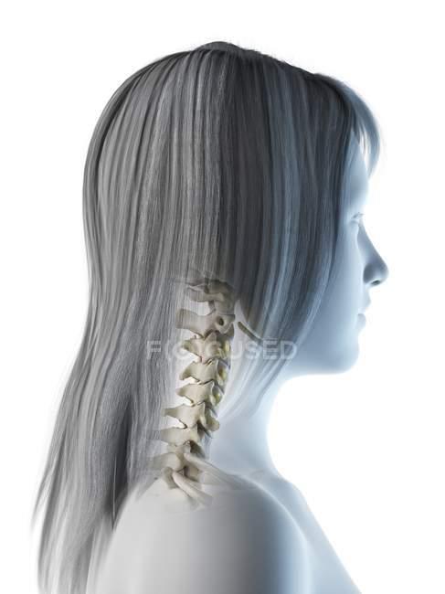 Huesos del cuello femeninos abstractos, ilustración por computadora . - foto de stock