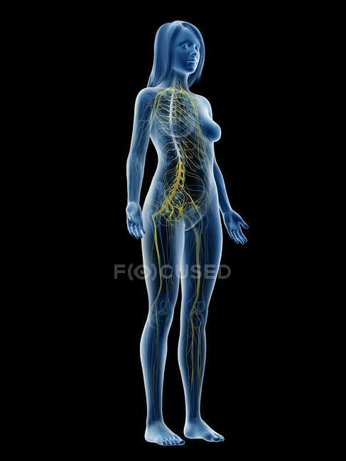 Abstract female silhouette with visible nervous system, computer illustration. — стокове фото