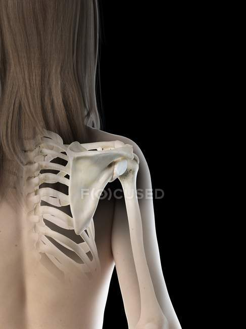 Female body with visible shoulder joint, computer illustration. — Stock Photo