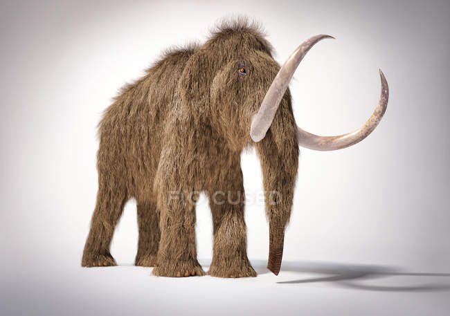 Woolly mammoth realistic 3d illustration, frontal perspective on white background and dropped shadow. — Stock Photo