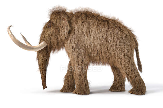 Woolly mammoth realistic 3d illustration, side view on white background and dropped shadow. — Stock Photo