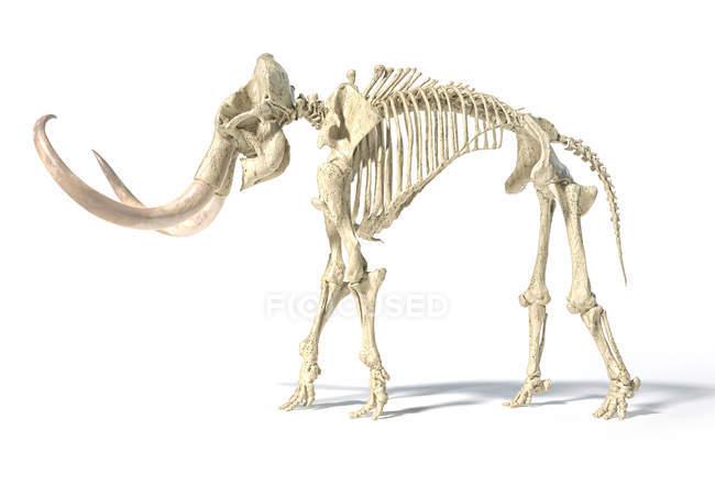 Esqueleto de mamut lanudo, ilustración 3D realista, vista lateral sobre fondo blanco y sombra caída . - foto de stock