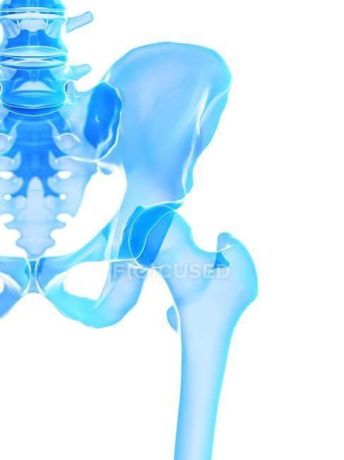 Human skeleton with hip joint, computer illustration. — Stock Photo