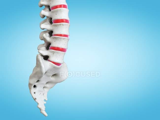 Representación 3D de la columna vertebral humana, ilustración por computadora . - foto de stock
