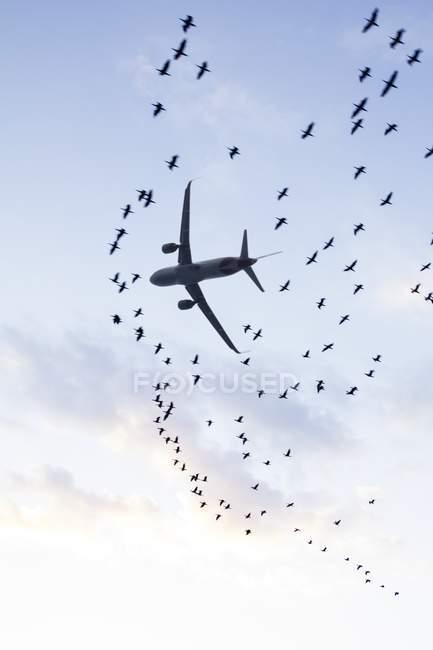 Низький кут Вигляд літака в блакитному хмарному небі і зграя птахів, концепції авіаційної безпеки. — стокове фото