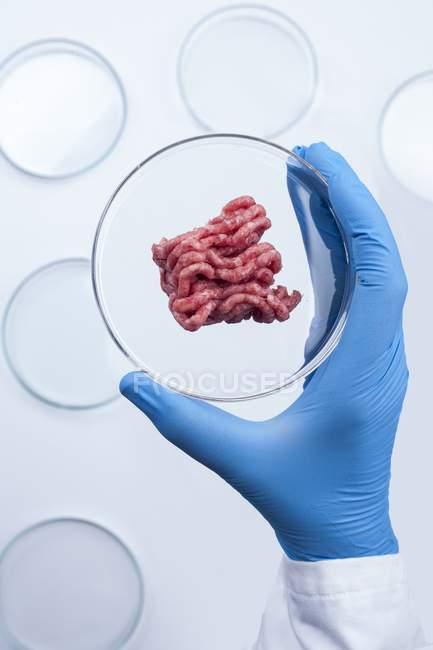 Científico sosteniendo placa petri con carne artificial, imagen conceptual de la carne cultivada cultivada en laboratorio . - foto de stock