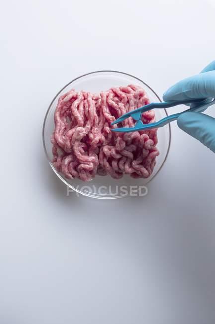 Cientista levando com pinças carne cultivada cultivada em laboratório, imagem conceitual da engenharia genética . — Fotografia de Stock
